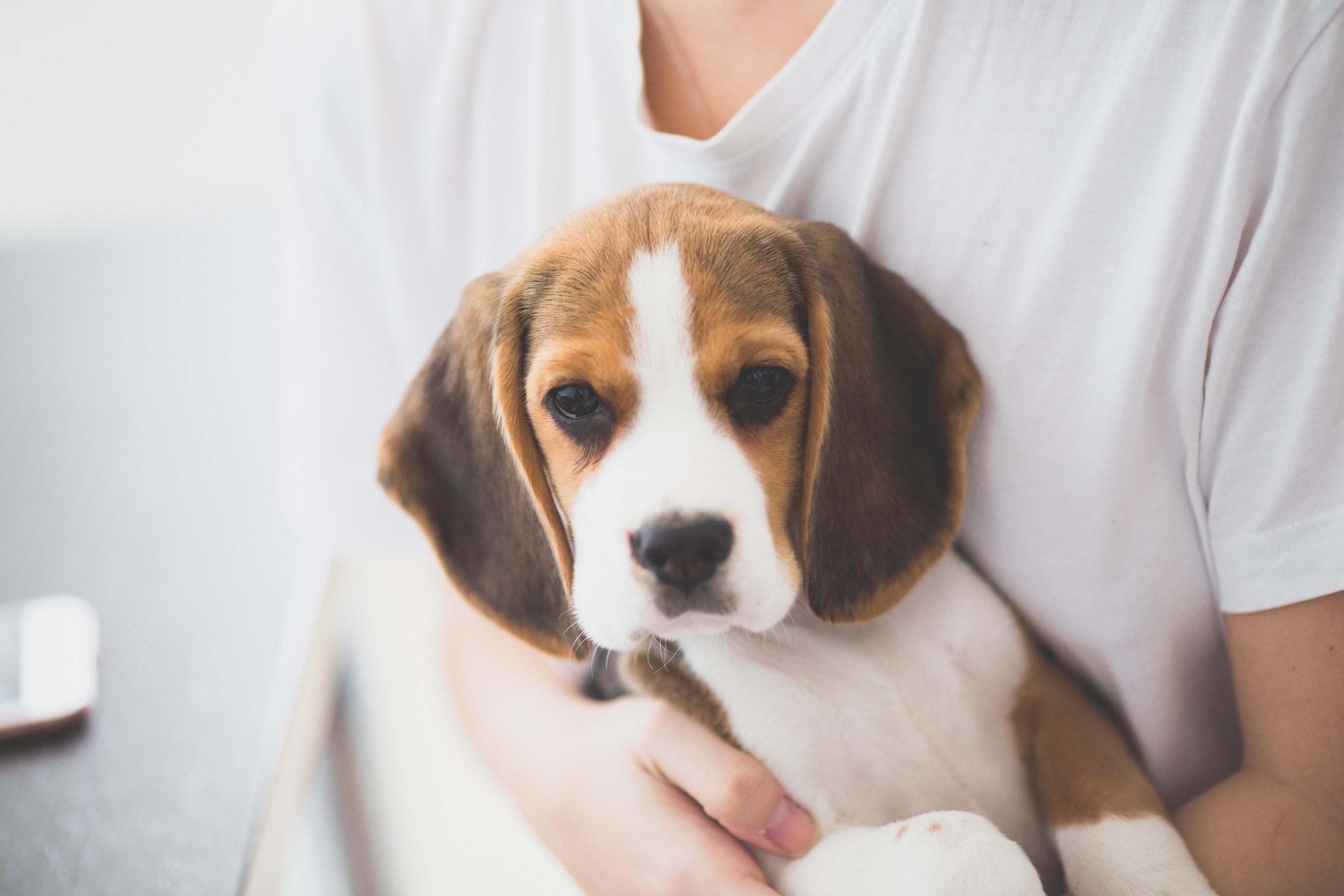 Peluquería canino